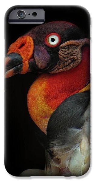 King Vulture-sarcoramphus Papa IPhone 6s Case
