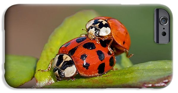 Beetle iPhone 6s Case - Ladybird Coupling by Rona Black