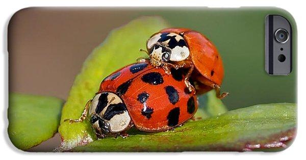 Ladybird Coupling IPhone 6s Case