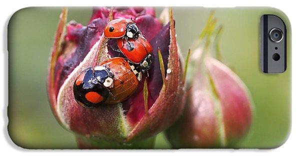 Beetle iPhone 6s Case - Ladybug Foursome by Rona Black
