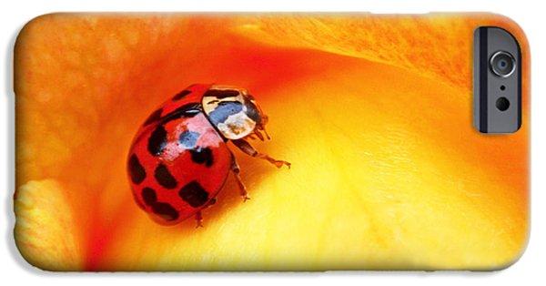 Ladybug IPhone 6s Case
