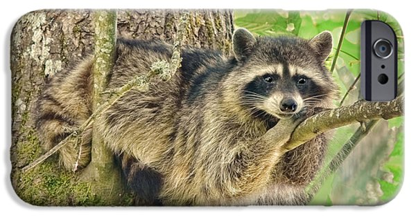 Lazy Day Raccoon IPhone 6s Case by Jennie Marie Schell