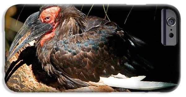 Leadbeaters Ground Hornbill IPhone 6s Case