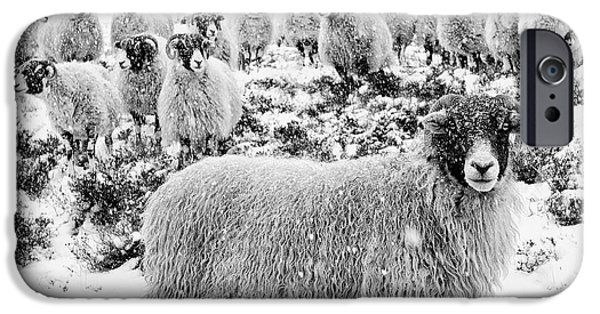 Sheep iPhone 6s Case - Leader Of The Flock by Janet Burdon