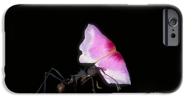 Leafcutter Ant IPhone 6s Case by Gregory G. Dimijian