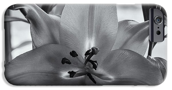 Lily 16 IPhone 6s Case by Mark Myhaver