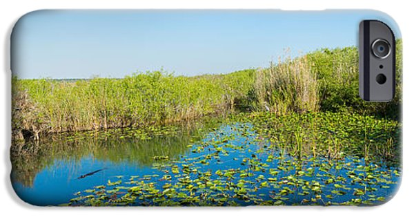 Anhinga iPhone 6s Case - Lily Pads In The Lake, Anhinga Trail by Panoramic Images