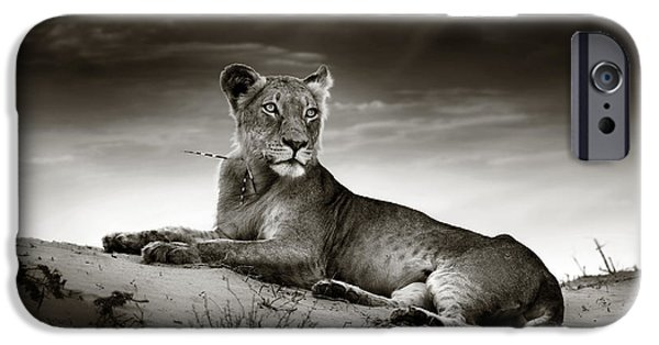 Cat iPhone 6s Case - Lioness On Desert Dune by Johan Swanepoel