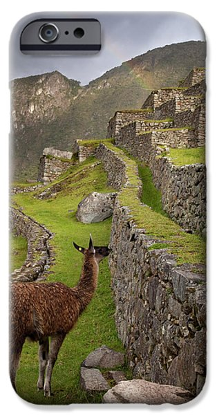 Llama Stands On Agricultural Terraces IPhone 6s Case