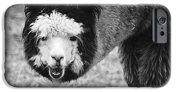 IPhone 6s Case featuring the photograph Llama by Yulia Kazansky