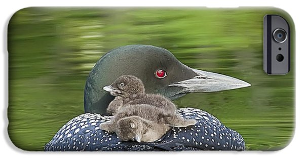 Loon iPhone 6s Case - Loon Chicks -  Nap Time by John Vose