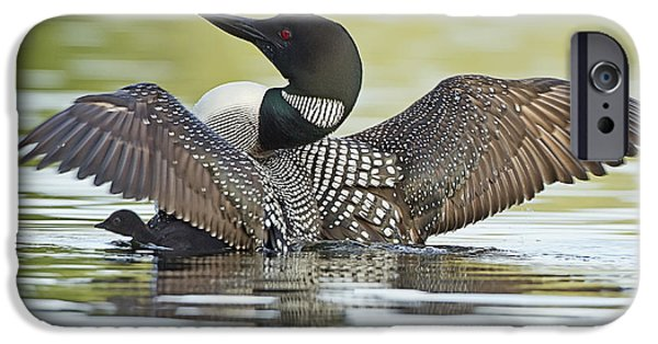 Loon iPhone 6s Case - Loon Wing Spread With Chick by John Vose