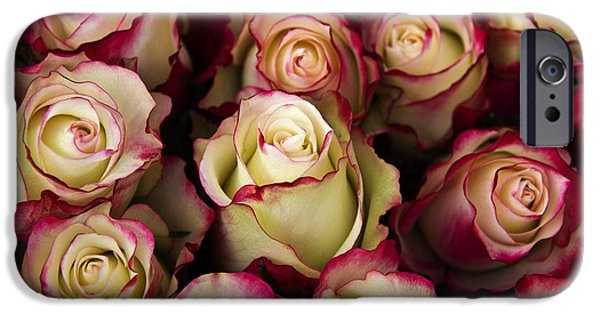 Love Is A Rose IIi IPhone 6s Case