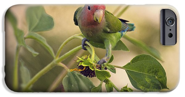 Lovebird On  Sunflower Branch  IPhone 6s Case by Saija  Lehtonen