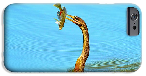 Anhinga iPhone 6s Case - Lunch On The Spear by Deborah Benoit
