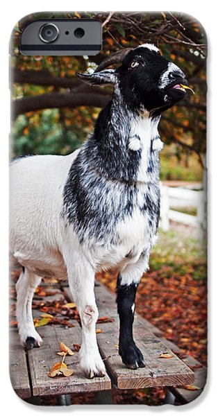Lunch With Goat IPhone 6s Case