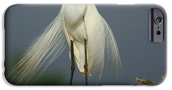 Majestic Great Egret IPhone 6s Case by Bob Christopher