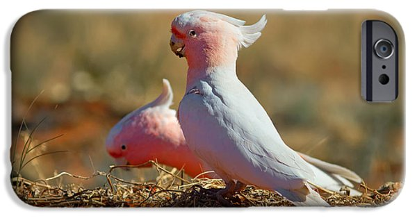 Cockatoo iPhone 6s Case - Major Mitchel Cockatoo by Bill  Robinson