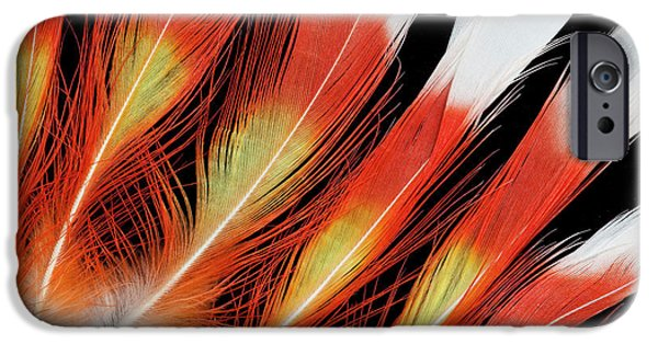 Cockatoo iPhone 6s Case - Major Mitchell Cockatoo Crown Feather by Darrell Gulin