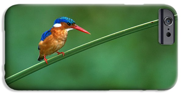 Malachite Kingfisher Tanzania Africa IPhone 6s Case by Panoramic Images
