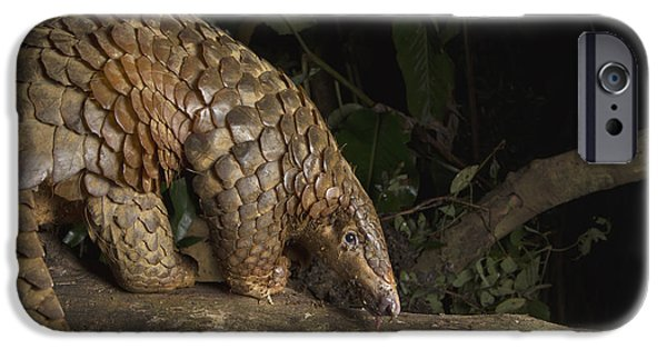 Malayan Pangolin Eating Ants Vietnam IPhone 6s Case by Suzi Eszterhas