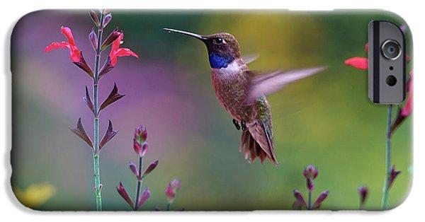 Hummingbird iPhone 6s Case - Male Black-chinned Hummingbird by Tim Fitzharris