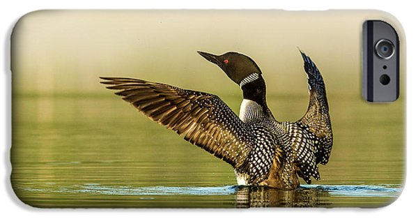 Male Common Loon Drying His Wings IPhone 6s Case
