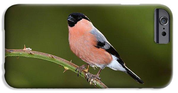 Male Eurasian Bullfinch IPhone 6s Case