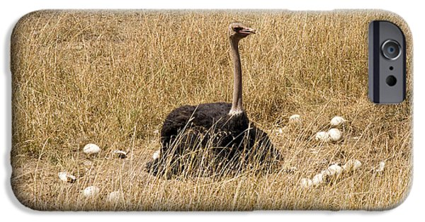 Male Ostrich Sitting On Communal Eggs IPhone 6s Case by Gregory G. Dimijian, M.D.