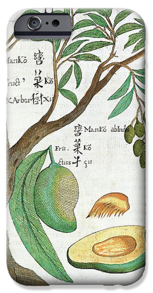 Mango Tree And Fruit IPhone 6s Case by Natural History Museum, London