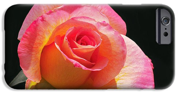 Mardi Gras Floribunda Rose IPhone 6s Case by Rona Black