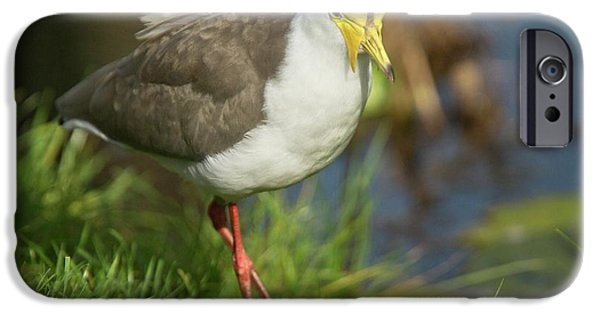 Lapwing iPhone 6s Case - Masked Lapwing by Bob Gibbons