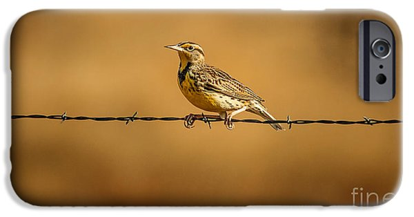 Meadowlark And Barbed Wire IPhone 6s Case by Robert Frederick