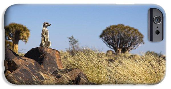 Meerkat In Quiver Tree Grassland IPhone 6s Case