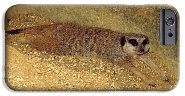 Meerkat Resting IPhone 6s Case