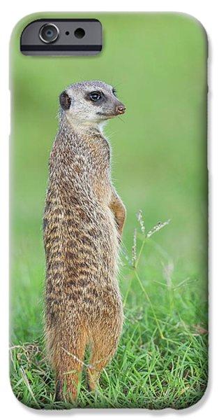 Meerkat Standing On Guard Duty IPhone 6s Case