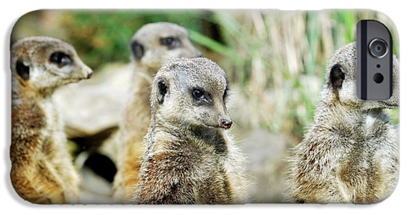 Meerkat iPhone 6s Case - Meerkats by Heiti Paves