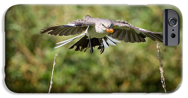 Mockingbird In Flight IPhone 6s Case by Bill Wakeley