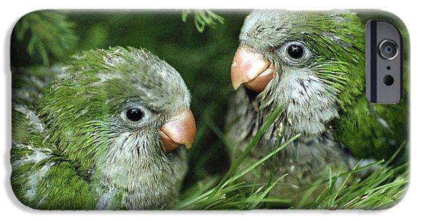 Monk Parakeet Chicks IPhone 6s Case