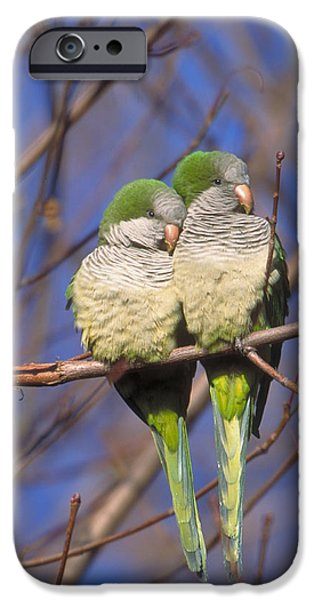 Monk Parakeets IPhone 6s Case