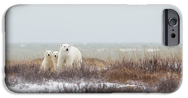 Polar Bear iPhone 6s Case - Mother & Cubs At The Seaside by Marco Pozzi