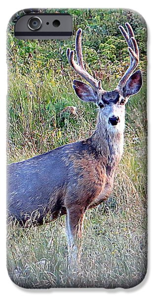 IPhone 6s Case featuring the photograph Mule Deer Buck by Karen Shackles