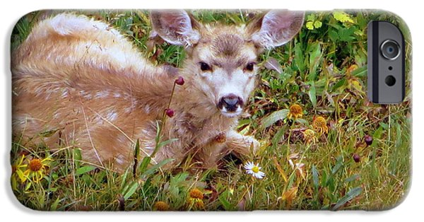 IPhone 6s Case featuring the photograph Mule Deer Fawn by Karen Shackles