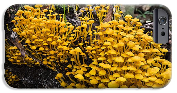 Mushrooms On Tree Trunk Panguana Nature IPhone 6s Case by Konrad Wothe