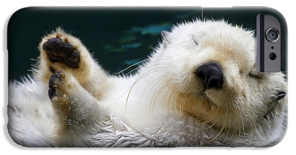 Otter iPhone 6s Case - Napping On The Water by Mike  Dawson