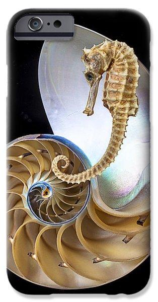 Nautilus With Seahorse IPhone 6s Case
