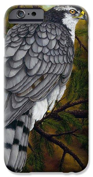 Northern Goshawk IPhone 6s Case by Rick Bainbridge