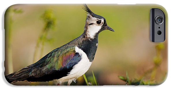 Lapwing iPhone 6s Case - Northern Lapwing by Willi Rolfes