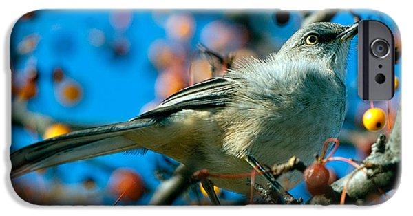 Mockingbird iPhone 6s Case - Northern Mockingbird by Bob Orsillo