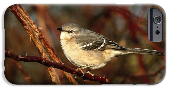 Northern Mockingbird Mimus Polyglottos IPhone 6s Case by Paul J. Fusco